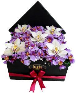Orquídeas en Caja