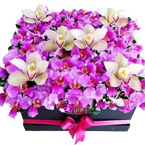 orquideas hawaianas en caja, irania floristeria bogota
