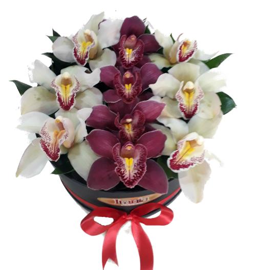 orquídeas en caja irania floristería bogota