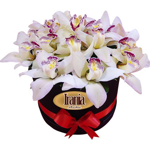 caja de orquideas cymbidium irania floristeria